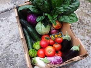 Osborne, Mixed box, Cornucopia, eggpland, tomato, spinach, cucumber, tomatillo, cabbage (9)