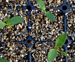 Seed Selection Blog Image (1)